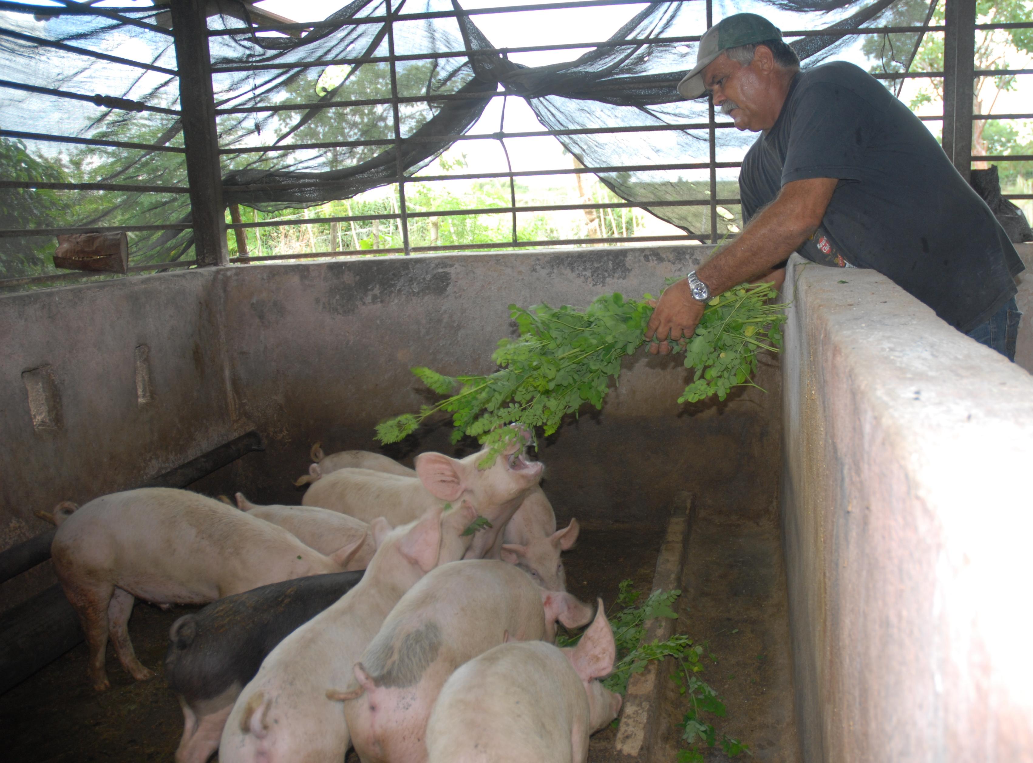 Ищу работу на ферму